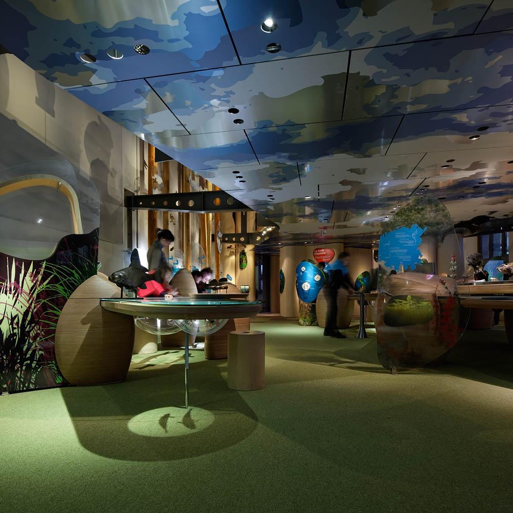 Galerie des enfants, Musée d'Histoire Naturelle, Hardel et Le Bihan Architectes, Paris, 2011